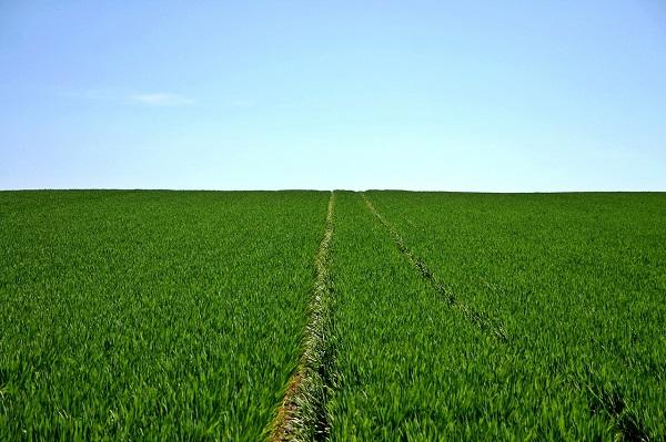 Registro General de la Producción Agrícola (REGEPA)