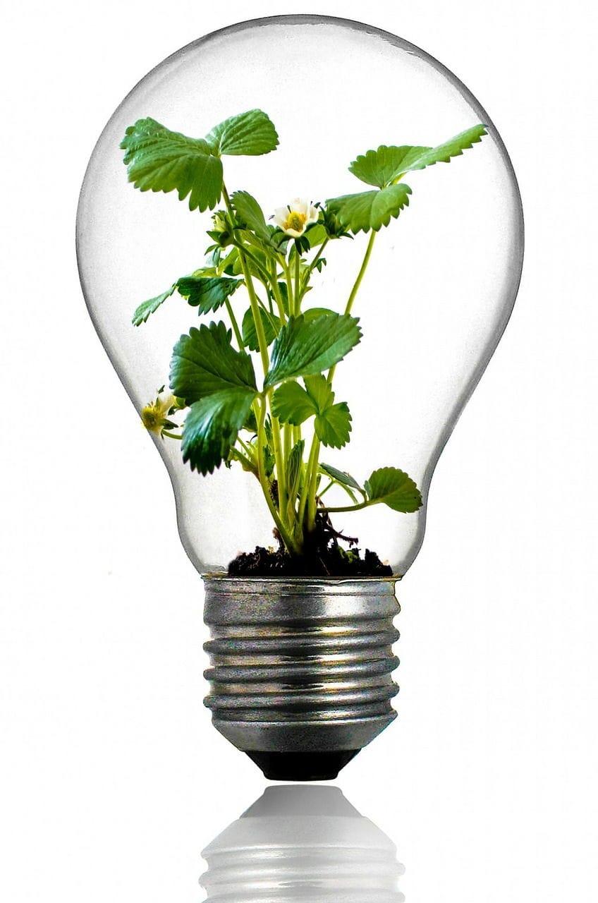 ideas innovacion