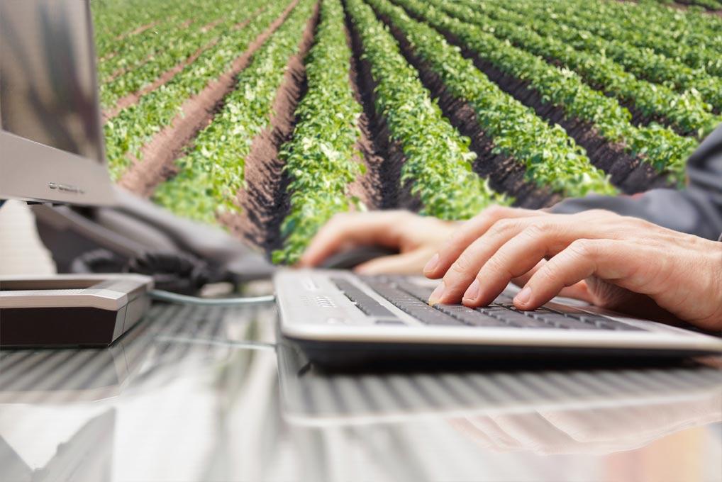 La digitalización de la empresa agroalimentaria