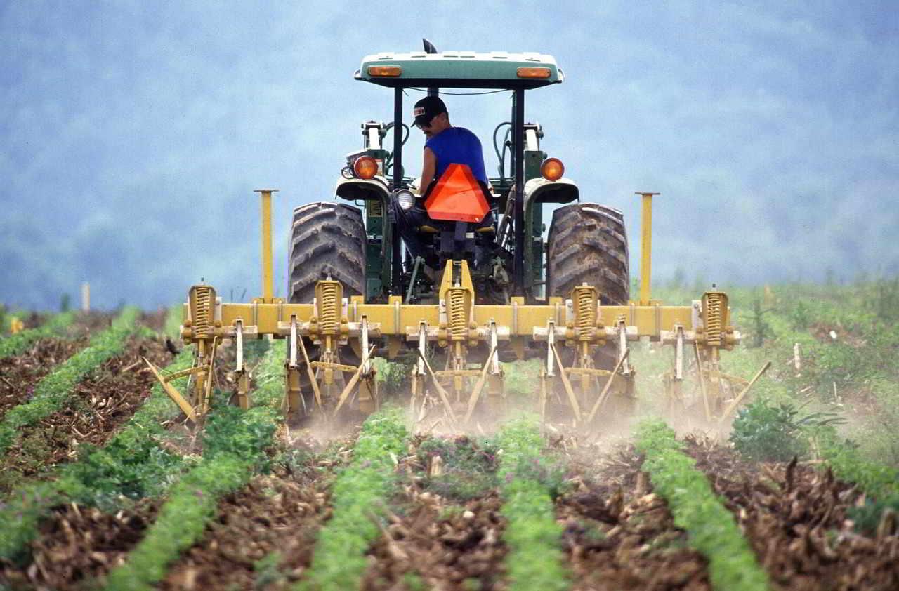 Régimen especial de la agricultura, ganadería y pesca (recibo agrícola)