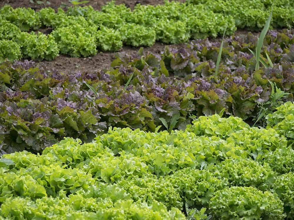 verduras-españa